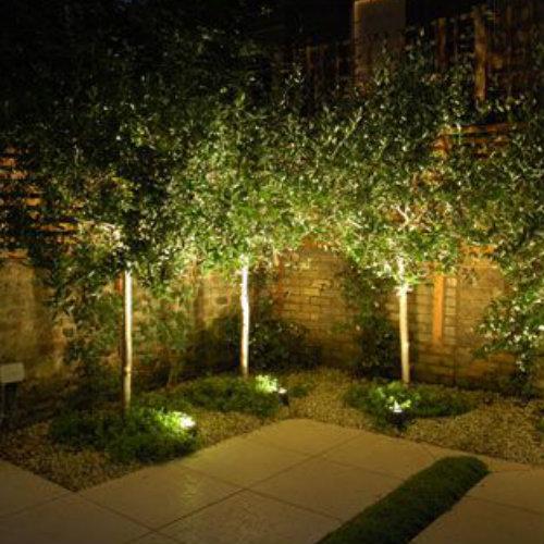 Árboles y pared iluminados